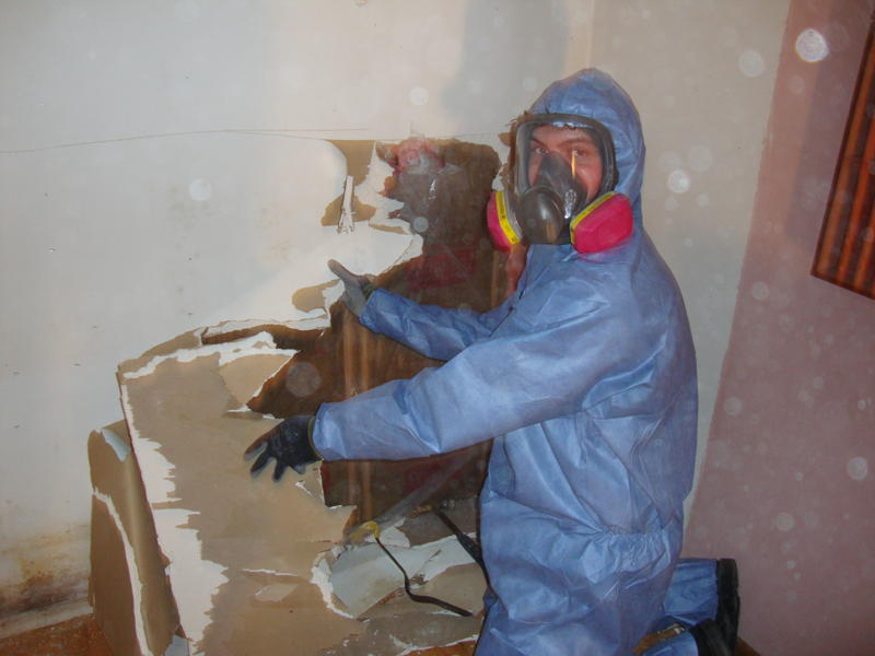 Mould Removal. How to Remove and clean Black Mould   How To Build A House