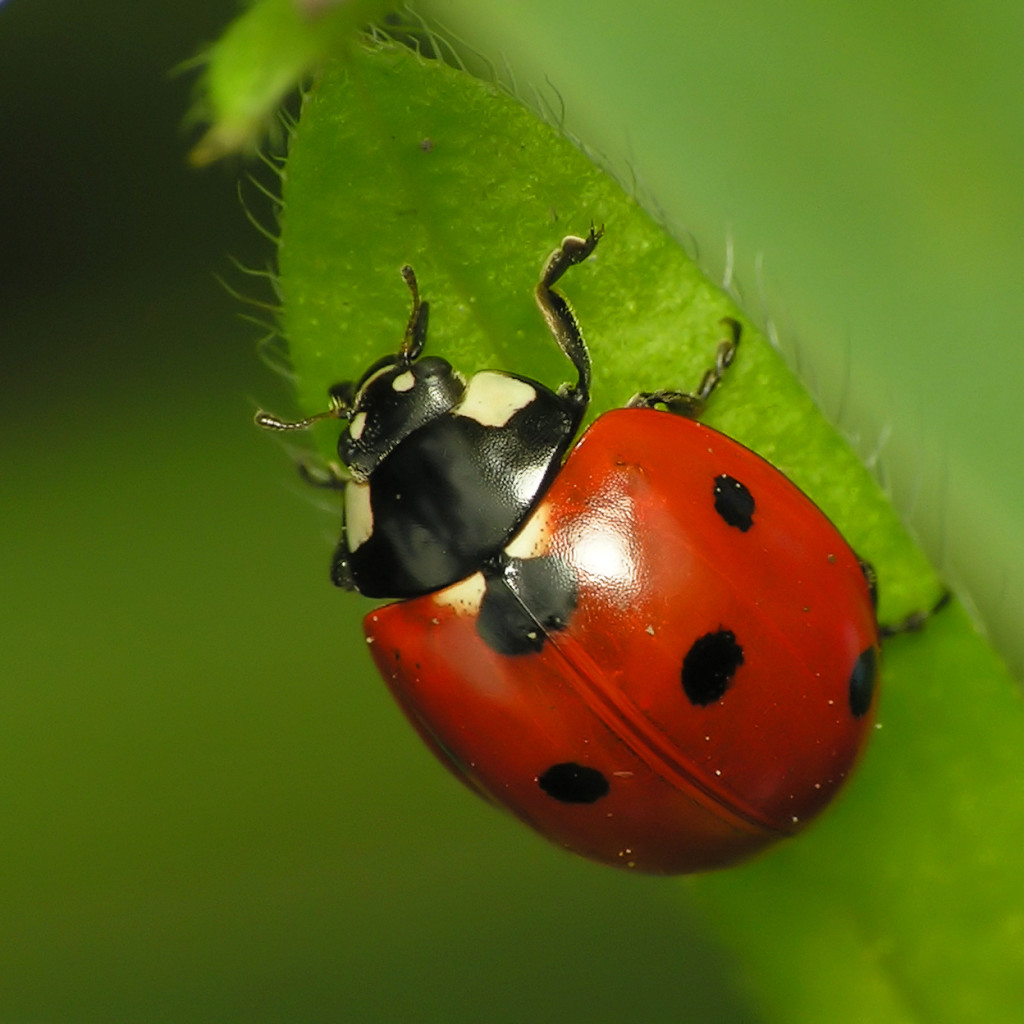 Attracting Good Bugs To Your Garden HOW TO BUILD A HOUSE
